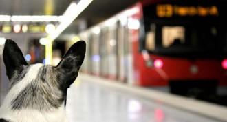 Guia pràctica: com es pot accedir al metro de Barcelona amb el nostre gos