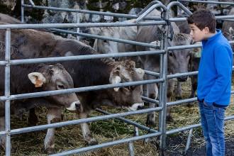 La Fira del Bestiar de Ribes arrenca els certàmens ramaders del Ripollès
