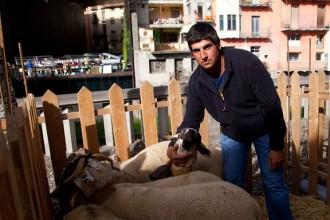 Vés a: Martí Picola: «Des que sóc pastor el sector oví no ha parat de caure»
