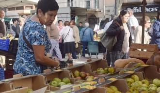 Vés a: El Parc Natural recupera les varietats de pomes tradicionals de la Garrotxa
