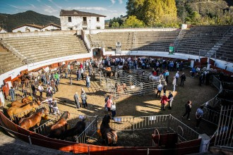 Olot celebra al llarg del 2015 els set segles de la Fira de Sant Lluc