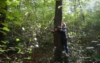 Vés a: Passejar pels boscos de la Garrotxa ajuda a les afectades per fibromiàlgia