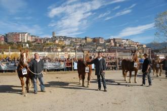 Tot a punt per a la celebració de la Fira de Puigcerdà aquest cap de setmana