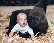 El temps no esborra el record de dos goril·les per una jove amb qui havien compartit la infància