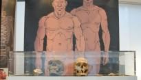 El Vendrell inaugura una mostra sobre els neandertals a Catalunya