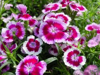 Vés a: Es redueix l'IVA del 21 al 10% per a la flor i la planta ornamental