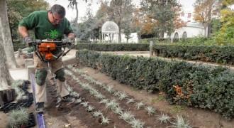 El Parc de Sant Jordi de Terrassa guanya 1.500 arbustos