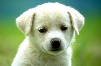 5 beneficis de tenir gos
