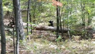 Fa una foto a un ós just abans que se'l mengi [MOLT FORT]