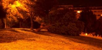 Cau un arbre al Parc de la Font Del Gat