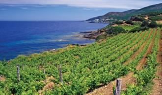Vés a: Decanter estrenarà el 2015 amb els millors vins de la mediterrània