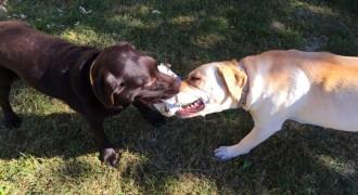 Vés a: Gossos assilvestrats amenacen espècies protegides al Llobregat