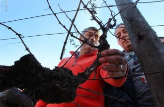 Vés a: Jornada formativa sobre poda sostenible a Vallformosa