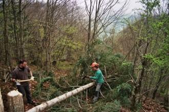 Vés a: Treballadors de Plusfresc faran de voluntaris als boscos del Pirineu