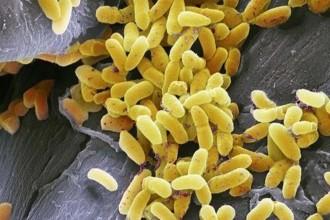 Els deu bacteris que podrien viure a la pantalla del nostre telèfon mòbil