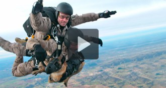 Dos soldats i un gos es llencen amb paracaigudes