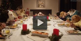 Gats i gossos a la taula de Nadal