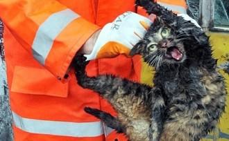 Què li ha passat a aquest gat?