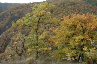 Vés a: Boscos singulars a Osona