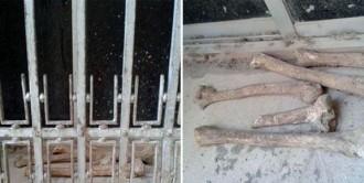 Enrenou per uns ossos trobats a la plaça de l'ajuntament d'Amposta i dipositats a l'ampit d'una finestra