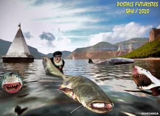 Silurs, taurons i balenes al pantà de Sau