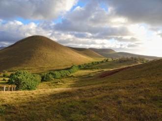 Vés a: Una Sola Terra demana que s'arrenqui els eucaliptus a Rapa Nui