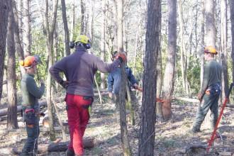 Vés a: Curs gratuït d'aprofitaments forestals del CFFE