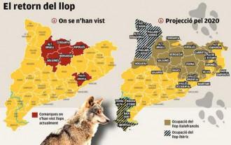 El llop podria tornar a les Terres de l'Ebre en només cinc anys