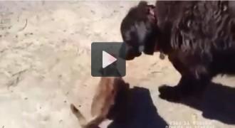 Vés a: Vídeo: Un gos allibera un gat d'una situació molt angoixant
