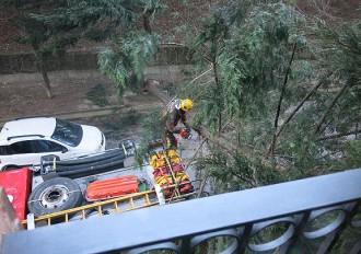 El fort vent provoca la caiguda de desenes d'arbres i el caos al tren