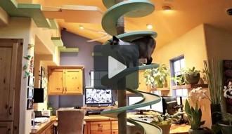 Un arquitecte construeix un parc temàtic per gats a casa seva
