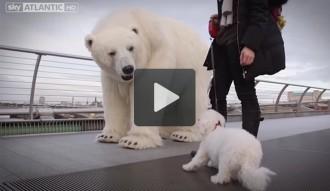 Què fa un ós polar al mig de Londres?
