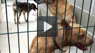 Més de 500 gats i gossos adoptats durant el 2014 a Granollers