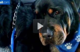 Un gos plora al costat del cos sense vida del seu germà