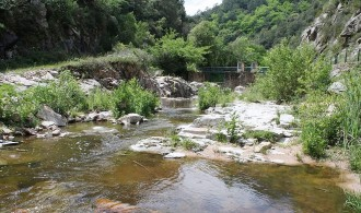 Vés a: El Ter i els seus afluents mantenen una qualitat biològica saludable