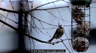 Vés a: «Birding» a Segura Viudas