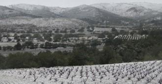 De la nevada de fa tot just un any, al temps primaveral d'aquest febrer