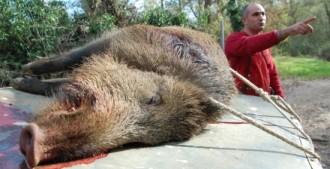 Vés a: Els pagesos de Girona volen que s'allargui en el temps la caça del senglar