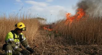 Cremes controlades al Delta per reduir el creixement dels senillars