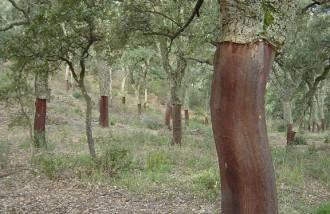 Europa fa costat a un projecte pioner per conservar els paisatges surers