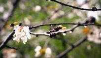 La primavera comença amb temps inestable