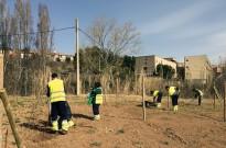 Berga comença a plantar vidalba per garantir-ne per Patum