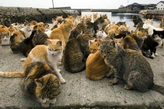 Una illa del Japó té més gats que habitants per metre quadrat