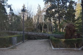 Vés a: El vent arrenca un arbre de deu metres a Olot
