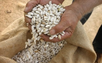 Vés a: La DOP Ganxet provoca erosió genètica i ataca el dret dels pagesos
