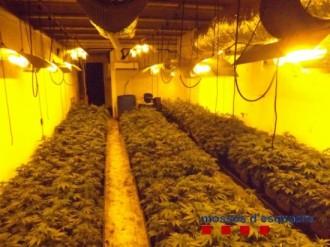 Els Mossos localitzen més de 1.100 plantes de marihuana a Vilablareix