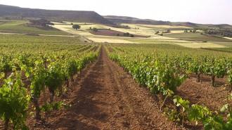 Vés a: Torres compra més vinyes a Ribera del Duero