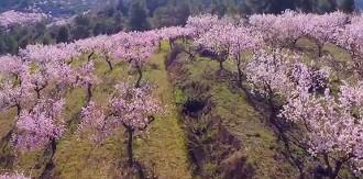 La primavera a vista de drone