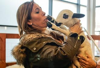 L'ovella Xisqueta li arriba a la cara a Alícia Sánchez-Camacho