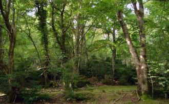El Grup de Defensa de la Natura demana cautela en la gestió de la biomassa al Berguedà